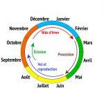 Cycle de vie de la chenille processionnaire